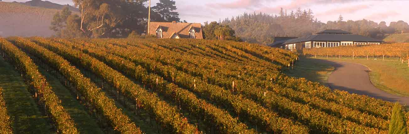 Special Offers Vintage Wine Tours